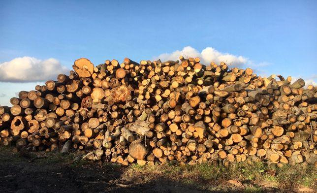 drewno sezonowane, kominkowe, suche