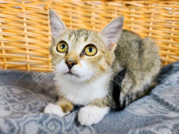 Жасмина кошечка 2.5 месяца киця кішка
