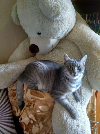 Отдам вискасную кошку, стерилизована ,привита , 8 месяцев
