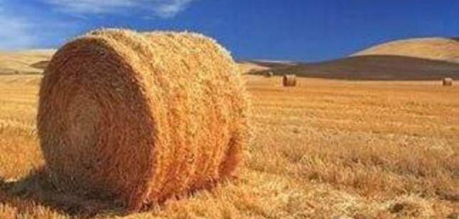 Продам тюки(пшеничні, ячмінні)
