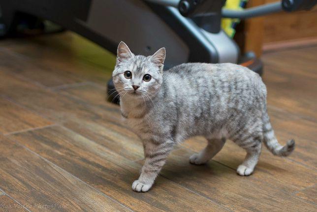Отдам в хорошие руки котенка девочку Хуффи.
