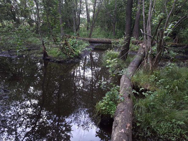 Działka leśna z rzeką, las działka w środku lasu na odludziu koło S 17