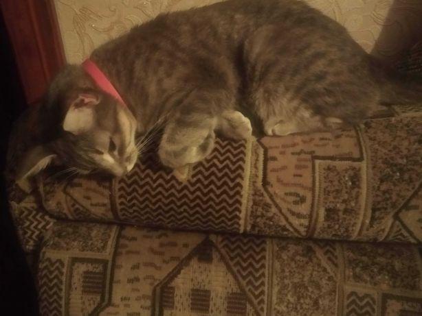 Пропала кошка по имени Сальма