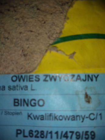 Sprzedam owies (BINGO)
