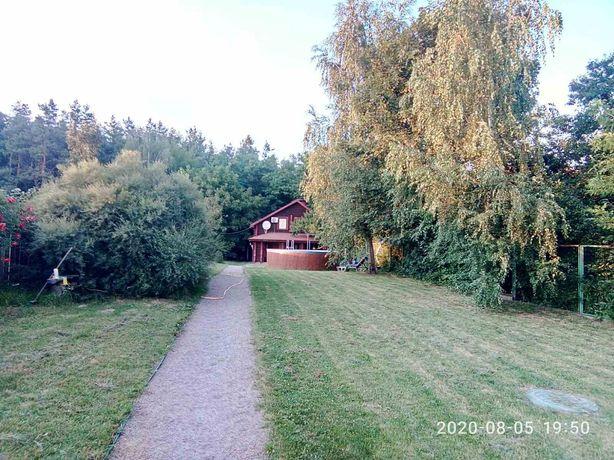 Сдается дом-сруб в лесу
