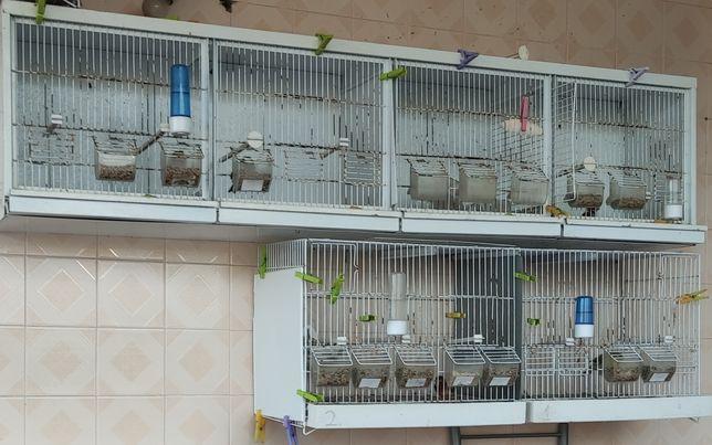 Viveiros de criação de canários