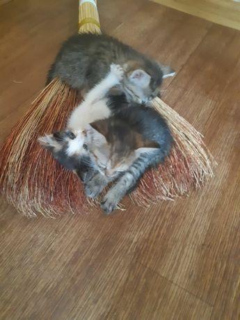 3 очаровательных кошечки ищут дом