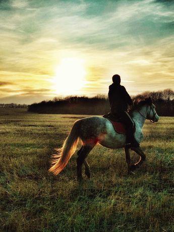 Прогулки на лошадях в Святогорске