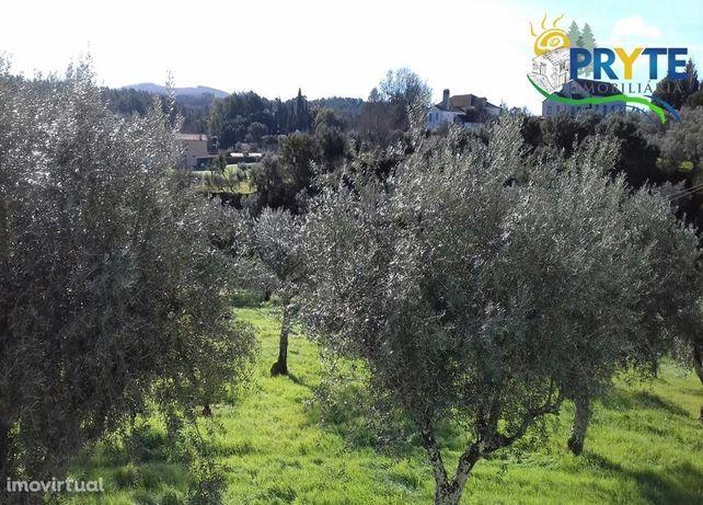 Quinta de tipologiaT5 situada perto do Rio Zêzere com árvores de fruto