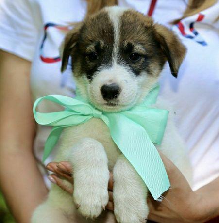 Отдам даром в добрые руки щенка