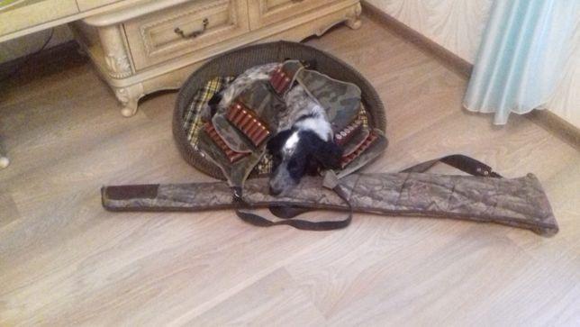 Вязка руский охотничий спаниель