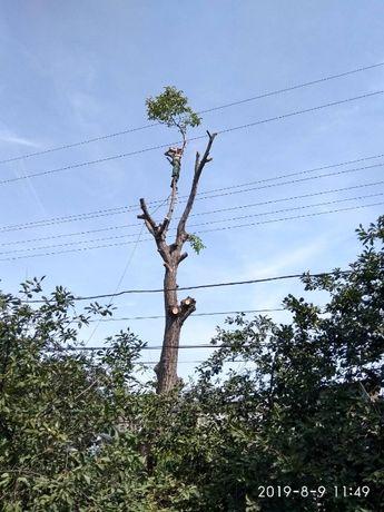 Спилим деревья руками из плеч,вывоз веток,удаление пней