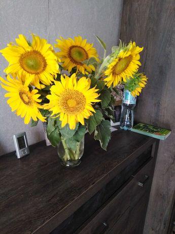 Słonecznik ozdobny, na kwiat, ziarka słonecznika