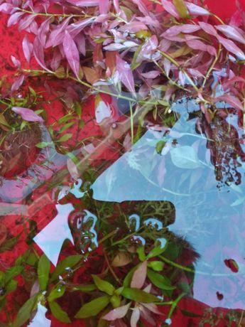 Гуппи,растения ,улитки