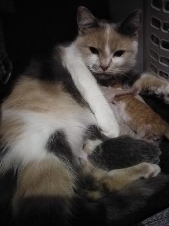 Отдам даром котят, в добрые руки...
