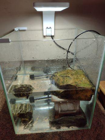 Akwarium z lokatorem