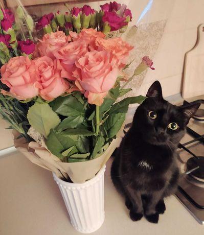 nadal poszukiwana czarna kotka - Lola - Gliwice, Zatorze
