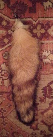 Продам лисий (или енотовый) хвост