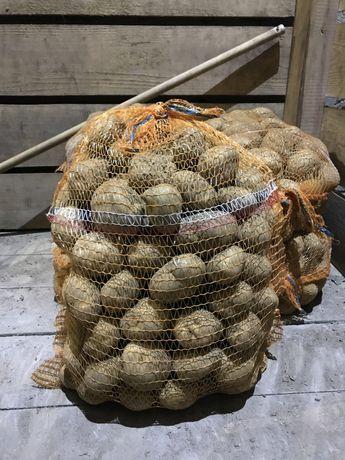 Ziemniaki Jadalne Vineta, Gala