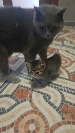Подарую кошенят(1дівч.,2 хлопчики)