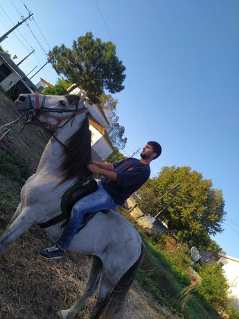 Cavalo cruzadoTy