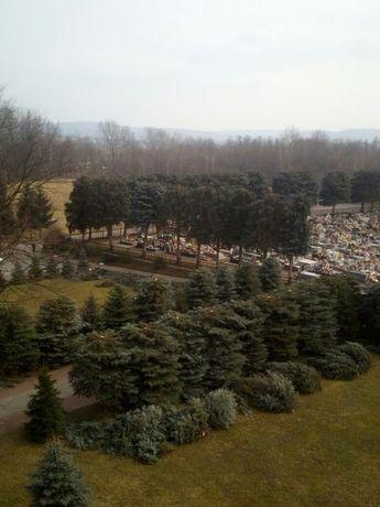 Wycinka Przycinka,Drzew Krzewów Modelowanie,Redukcja koron
