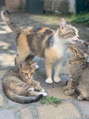 Игривые кошки, стерилизую за свой счёт