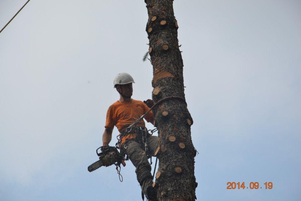 AlpinTom Wycinka i Pielęgnacja Drzew