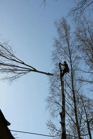 Спил дерева в труднодоступном месте