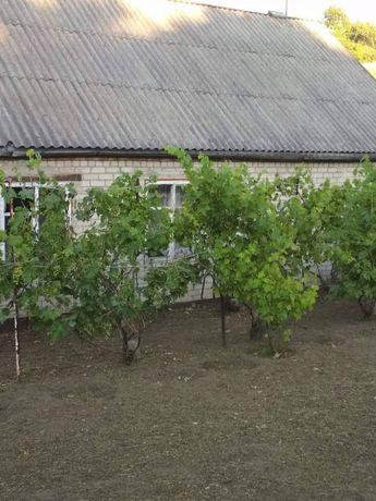 Продам дом ул.Васильковская.
