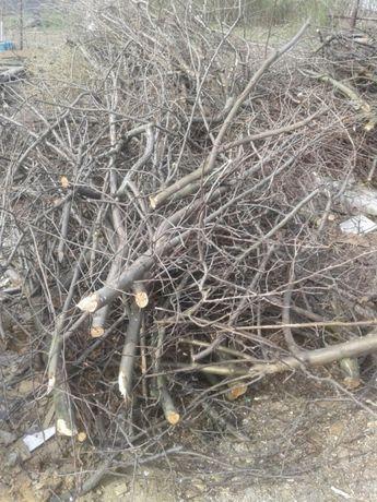 Wywóz gałęzi odbiór