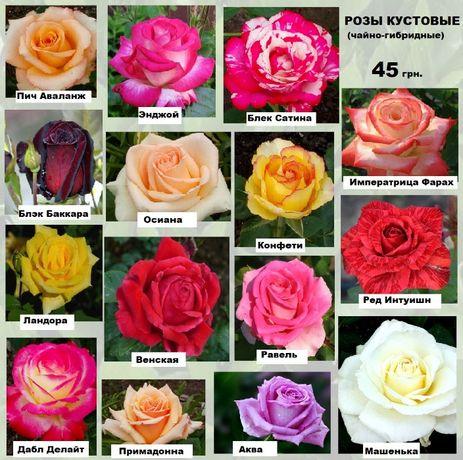 Саженцы плодовых деревьев , роз и многолетних цветов