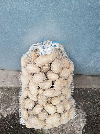 ziemniaki irga białe