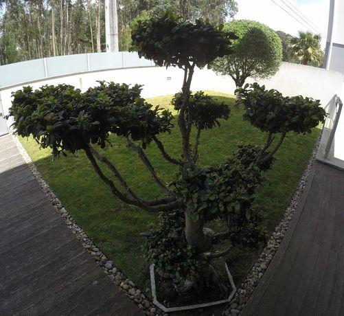 Bonsai de exterior e peças decorativas