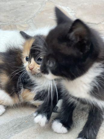 Котята бесплатно и в подарок пачка корма