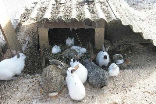 Продам кроликов(калифорния, нем.строкач, серебро)разного возраста