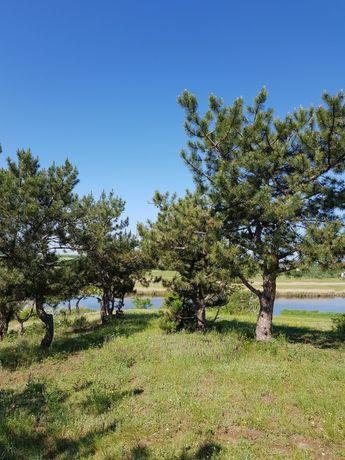 25 соток  в живописном месте, в лесу у реки. Калиновка Витовский р-н