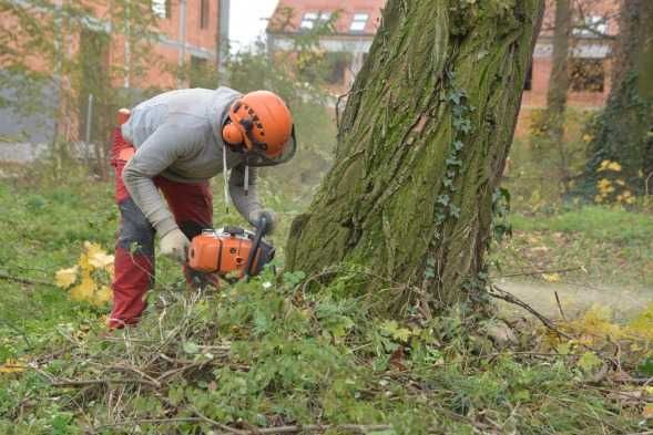 Wycinki drzew usługi koparką- wywrotką