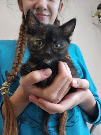 Віддам котеняток в хороші руки. Триколірні коти приносять удачу!