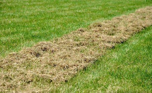 Wertykulacja trawników, nawożenie, odchwaszczanie, prace porządkowe