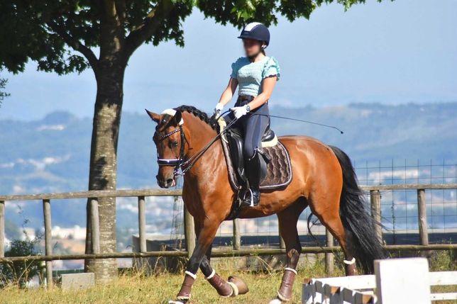 Cavalo Lusitano ensino