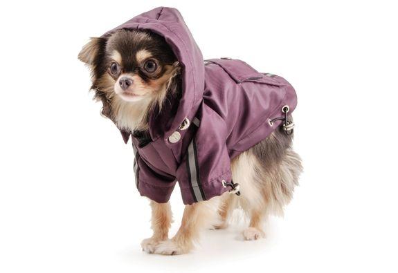 PromocjaPiekna ocieplana przeciwdeszczowa kurtka dla psa.Ciemny fiolet