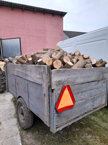 drewno drzewo lisciaste grab debina jesion