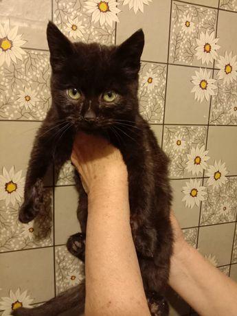 Милый котенок в хорошие руки бесплатно. Отдам котят даром. Срочно!!!