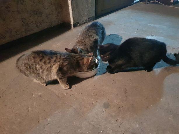 3 dorosłe koty , 2 kotki 1 kot