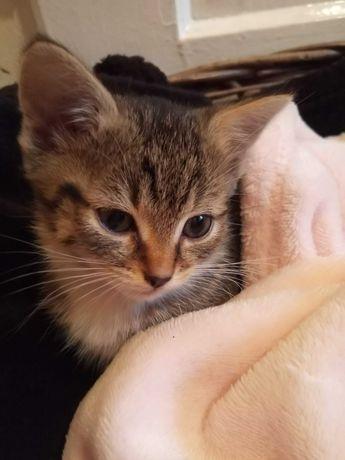 Kocurki i kotki 2wu miesięczne