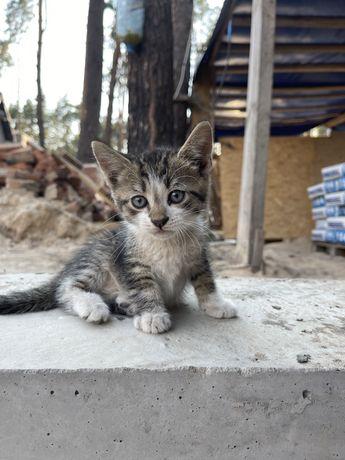 Двух месячные котята живут в опасном месте