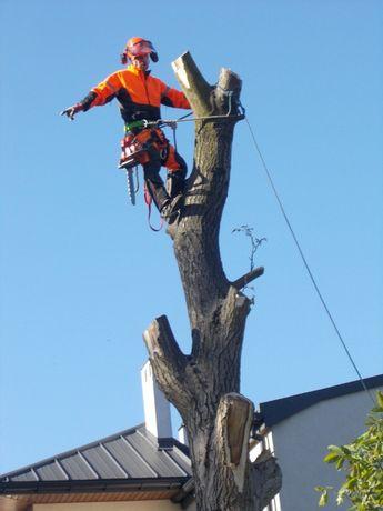 Cięcie przycinanie wycinka drzew Pabianice Łódź Aleksandrów Ksawerów