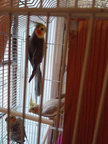 Troca caturras por outras aves