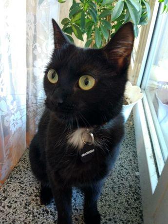 Zaginęła czarna kotka
